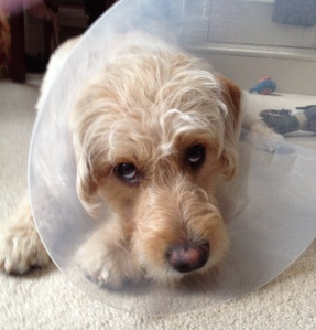Dog Cone by Yasmin