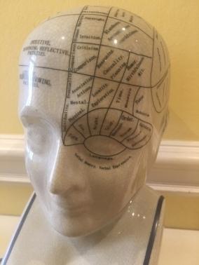 Brain IMG_8532